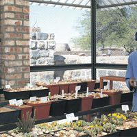 Alte Kalköfen Lodge proudly hosts the biggest registered collection of Lithops in Namibia.